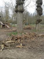 Este es el lamentable estado en el que ha quedado Fuentes Blancas.  No sé si era necesario talar los árboles, pero creo que podrían haber recogido los restos, máxime cuando se encuentran en una zona de juegos infantiles.