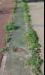 Estas fotos son frente al Diario de Burgos pero podriamos sacar cientos de fotos de como las hierbas invaden la acera y el carril-bici a lo largo de todo el paseo del rio Vena hasta Villimar. Si las cosas se hiciesen bien y se rellenase de cemento todos los huecos no se acabaria llenando de tierra y luego saliendo hiervas. Esto no hace falta ser ingeniero para saberlo.Como no es jardin ni es del barrendero pues asi esta todo el paseo. Haber si se hace  algo y se quita todo esta tipo de hierbas que denotan dejadez.