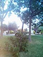 Ha vuelto a pasar otra vez!.  De nuevo un árbol del Torreón ha tenido que sufrir las consecuencias del vandalismo en la madrugada del Sábado pasado.