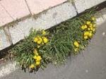 Ya es primavera en los imbornales de Avila