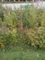 Adjunto fotos correspondientes al Parque de la Luz, (G3),  para denunciar  el estado del mismo: Las papeleras no se vacían desde hace 15 días, lo que supone que no hay sitio para depositar nada y dadas las temperaturas que hemos tenido, los olores son insalubres. Los jardines no se arreglan desde hace  1 mes. Fotos tomadas el día 26/06/2017