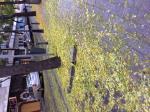 No había activado el Ayuntamiento un plan de limpieza para el tema de las hojas...? O será para el próximo año... Aparte del aspecto, el peligro que corremos los vecinos, porque tapan socavones, bordillos que las raíces de los árboles levantan.... Tenemos que esperar a que ocurra algún accidente?  Se están luciendo....