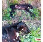 Maltrato animal en la provincia de Toledo