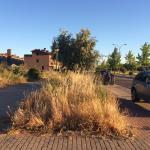 Esto es el aspecto de la calle Albacastro y Aurelio Rubio, los vecinos pagan  800 euros de IBI y el servicio de jardines es el que se vé, nunca pasan a segar hierba de la zona y este es estado de nuestros parques y jardines.