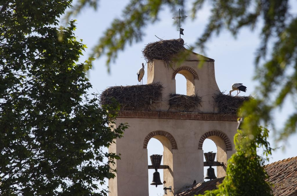 Cigüeñas abulenses