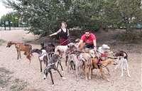 Libera! carga contra los cazadores por el abandono de galgos