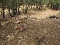 Localizan 83 cadáveres de ganado ovino y caprino en Torrubia