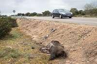 2.350 siniestro y 25.000ht afectadas por la fauna salvaje