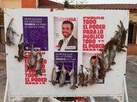 Aparecen 16 conejos muertos en un cartel de Alberto Garzón