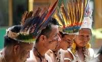 Los 'Guardianes del Amazonas' se plantan ante la tala ilegal