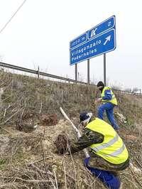 Caza de conejos con hurón en una carretera de la provincia de Burgos.
