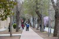 Los cuatro nuevos grados de la UCLM aportan 85 plazas