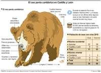 Los osos cantábricos evolucionan favorablemente