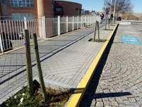 IU pide reponer los árboles junto al Hospital General