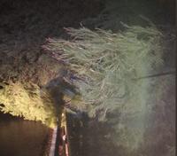 Un árbol bloqueó la carretera del Cementerio