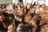 La nueva granja de Toledo, con 11% de producción ecológica