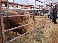 La Feria Ganadera de Soria regresa con 50 expositores
