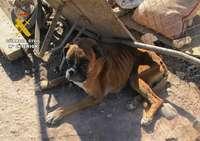 Detienen a un criador de perros por maltrato animal