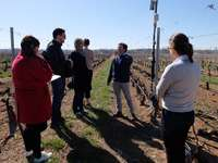 Las visitas a los viñedos de la zona de la DO es una de las actividades que buscan los que se acercan a la Ruta del Vino Ribera del Duero.
