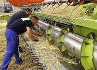 La especialización en agricultura garantiza el empleo