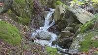 La Selva de Irati, en pleno esplendor otoñal