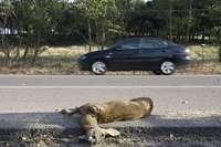Los cazadores alertan del riesgo de accidentes con fauna