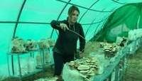 EntreSetas, premio recuperación de cultivos tradicionales