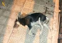 Investigan a un hombre por golpear a un perro en Aguilar