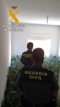 Seis detenidos en dos operaciones contra la marihuana