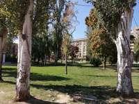 El riesgo de caída obliga a talar 3 árboles en un parque