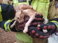 Los bomberos rescatan un gato ciego