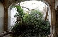 La vegetación y los escombros invaden el interior de la ermita de Nuestra Señora del Campo.
