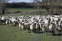 Una decena de jóvenes se forma en ganadería