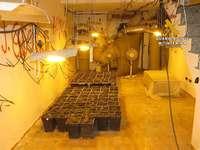 Un hombre niega ser el dueño de 210 plantas de marihuana