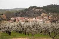 Comienza la campaña de la cereza del Valle de las Caderechas