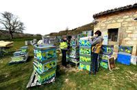 Los apicultores, encargados ellos mismos de pintar las cajas con colores llamativos, se aseguran así de que abeja distinga su casa y no se equivoque de destino.