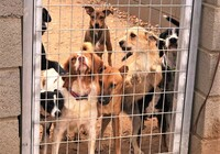 El refugio de animales de Tobarra «cumple con la ley»