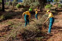 Imagen de archivo de trabajos de acumulación de residuos forestales para su posterior eliminación.