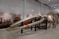 Reabre el Museo de Ciencias Naturales de Los Yébenes