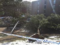 Grupo Raga asume los parques con muchos daños tras la nevada
