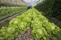 La Junta aboga por una alimentación sostenible y saludable