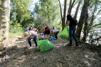 Vecinos de Arroyo limpian las riberas del Pisuerga