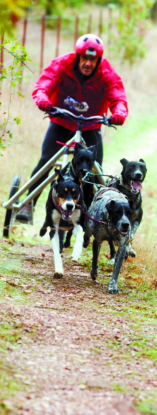 La compenetración entre el deportista y los perros debe ser buena. Valdivielso