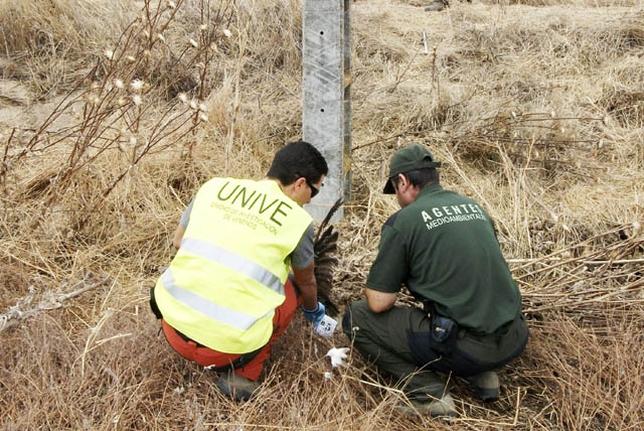 Agente de la Unive ayuda a un agente forestal en las pesquisas de un caso de envenenamiento.