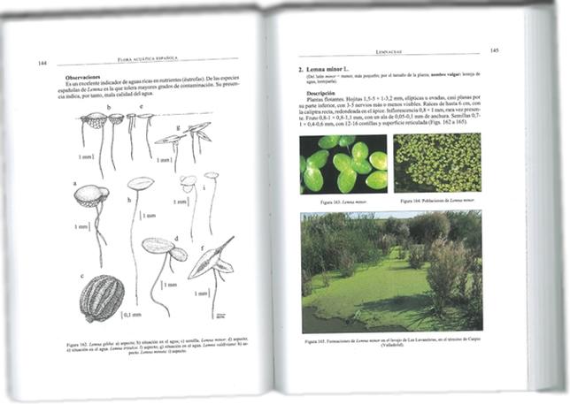 Una de las páginas interiores mostrando una de las variedades de lenteja de agua (Lemma minor)