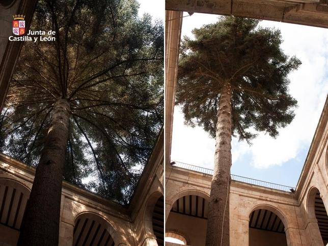 Las ramas impedían que la luminosidad entrara en el claustro y favorecían las humedades.