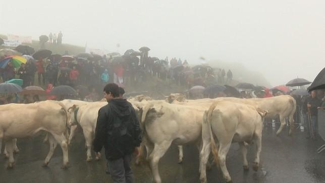 Los ganaderos franceses llevan veinte vacas y los navarros eligen tres