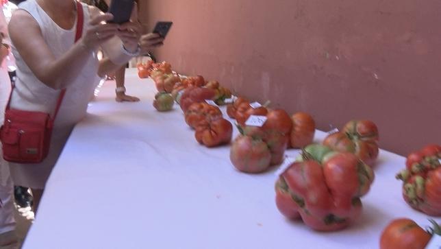 La mesa con algunos de los tomates a concurso Navarra Televisión