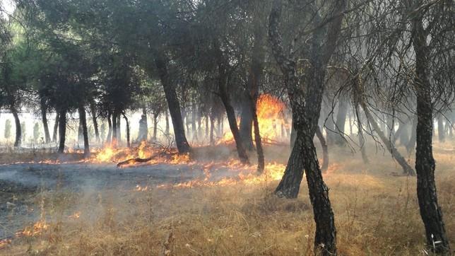 Los bomberos sofocan en el Pinar de Las Flores
