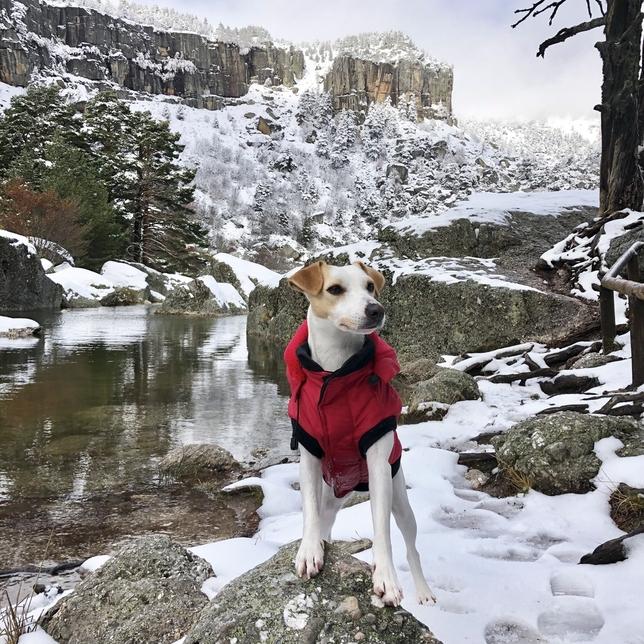 El perro turista Pipper llega a Soria